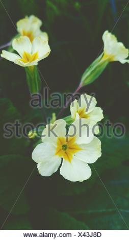 Close-Up Of White Flowers Blooming Outdoors - Stock Photo