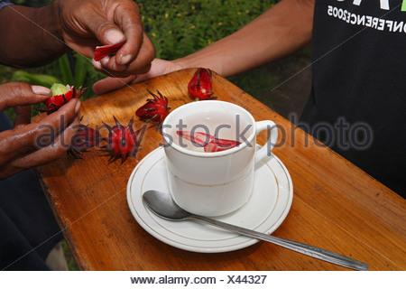 Cup of tea made from Hibiscus or Rose of Sharon or Rosemallow (Hibiscus sabdariffa) blossoms, Yayorin, Pangkalan Bun, Central K - Stock Photo