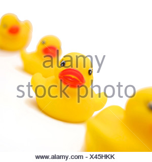 studio shot, cut out, white background, yellow, wood duck, close-up, - Stock Photo