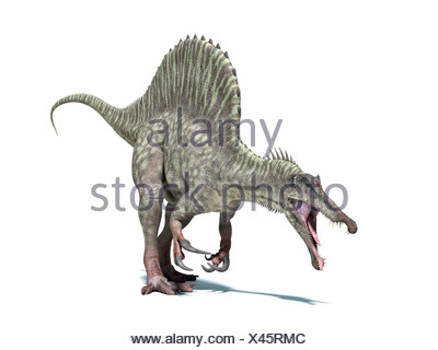 Spinosaurus dinosaur computer artwork This dinosaur lived 95 to 80 million years ago during the Late Cretaceous period - Stock Photo