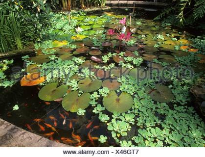 Birmingham Botanical Gardens, lily pond in glass house ponds lilies ...