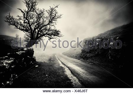 Tree on a foggy day. Settal, Craven, Yorkshire Dales, North Yorkshire, England - Stock Photo