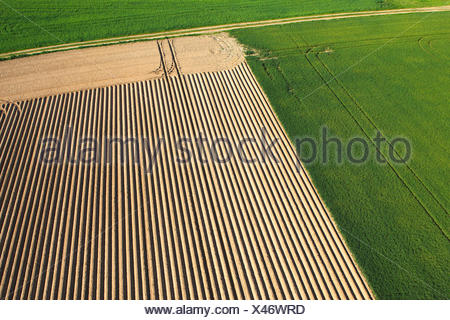 agricultural area with fields and grasslands from the air, Belgium - Stock Photo