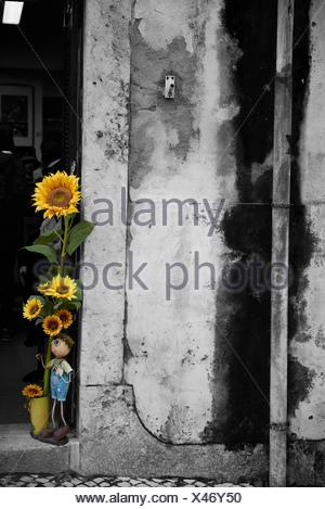 Photograph in black and white mixed with colour of Sunflower, Lisbon, Portugal, Europe - Stock Photo