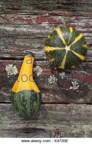 Different shapes of squash - Stock Photo