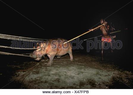 El Molo Warriors/ Hunters hunting hippopotamus (Hippopotamus amphibius) at Hippo Hunt using pole spears and ropes, El Molo Tribe, Lake Turkana, Kenya. - Stock Photo