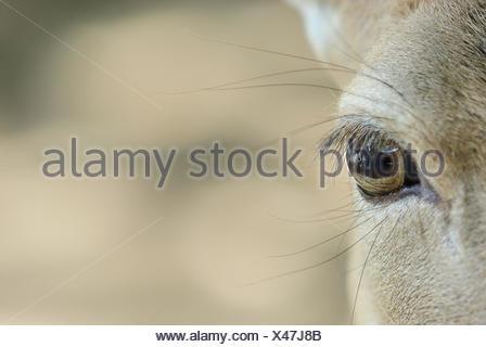 detail mammal mammals - Stock Photo
