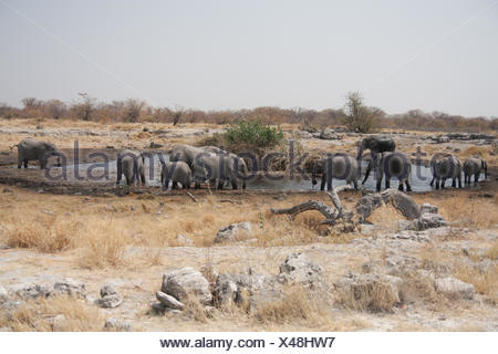Group Of Elephants Standing Near Waterhole - Stock Photo