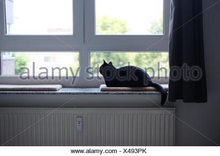Black Cat Sitting On Window Sill - Stock Photo