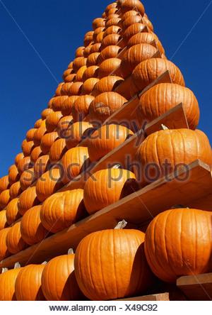 marrow, field pumpkin (Cucurbita pepo), pyramid of pumpkins against blue sky - Stock Photo