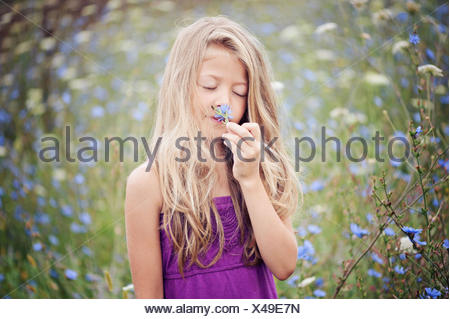 Portrait of young girl smelling flower (6-7) in chicory field - Stock Photo