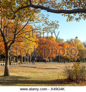 Autumn colors at the Charles River bank on Harvard University campus in Cambridge, MA, USA in Fall - Stock Photo