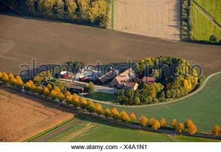 Aerial photograph, farm, fields, agriculture, Ascheberg near Muenster, Muensterland, Nordrhein-Westfalen, Germany, Europe - Stock Photo