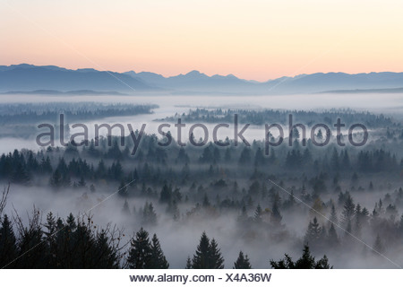 Conifer forest in morning fog, morning mood in the Pupplinger riparian forest near Wolfratshausen, Isar wetlands, Upper Bavaria - Stock Photo