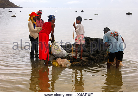 A group of local shell gatherers in the lagoon near Morne Brabant, Mauritius - Stock Photo