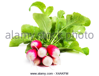 A bunch of fresh garden radishes over white background - Stock Photo