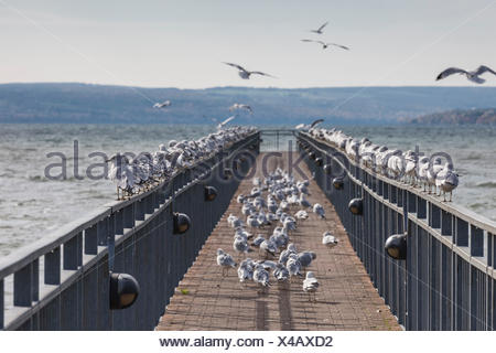 USA, New York, Finger Lakes Region, Skaneateles, pier on Skaneateles Lake - Stock Photo