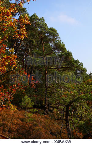 Autumn forest in the Pfalz - Stock Photo