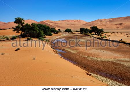 Rare water in the Tsauchab River, Sossusvlei in the Namib Desert, Namibia, Africa - Stock Photo