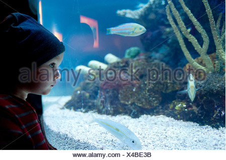 Young boy looking at fish in aquarium - Stock Photo
