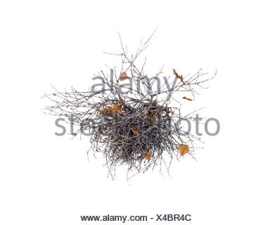 tangle of branches on a white background - Stock Photo