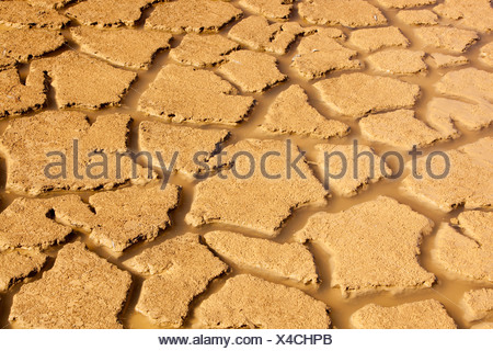 A farmers watering hole on a farm near Shepperton, Victoria, Australia, almost dried up, due to the drought. - Stock Photo