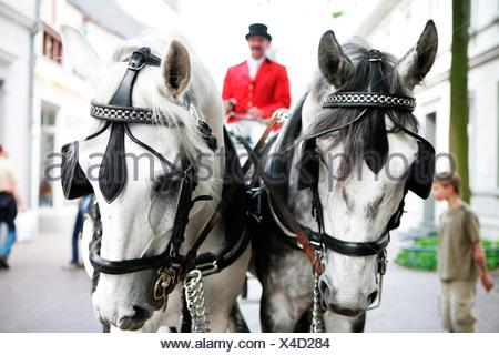 Wedding carriage, white horses, coachman - Stock Photo