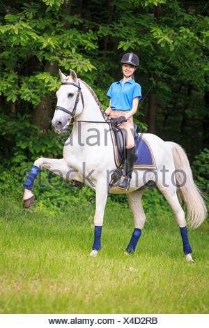 Lusitano Rider gray horse performing the Spanish walk Austria - Stock Photo