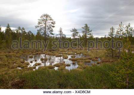 Lake landscape, Lapland, Finland, Europe - Stock Photo