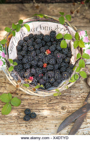 seek  and you shall find, blackberries in paper lined basket against rustic wood and vintage scissors, - Stock Photo