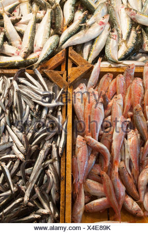 Fishs in wooden box, fish market, Athen, Greece - Stock Photo
