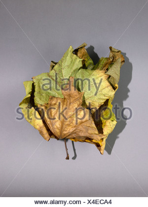 Autumn leaves on grey background - Stock Photo