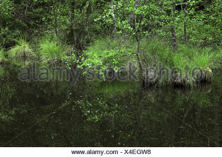 nature reserve Mosbachtal, near Dahn, Germany - Stock Photo