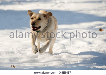 Dog, close-up - Stock Photo