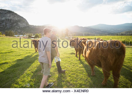 Father and son approaching cows in sunny field on rural farm - Stock Photo