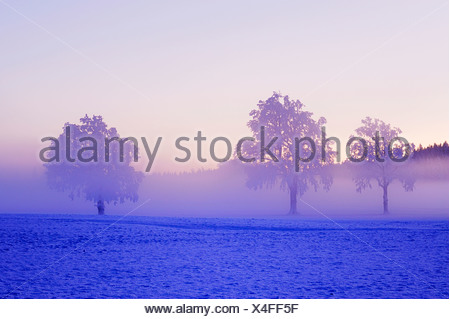 Winter landscape shrouded in fog, Horben, Aargau, Switzerland, Europe - Stock Photo