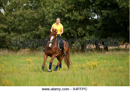 Woman riding a galloping Hanoverian horse in a meadow - Stock Photo