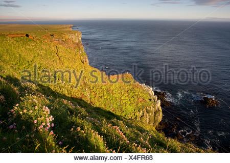 Bird cliff Skoruvikurbjarg on the Langanes peninsula, Iceland, Europe - Stock Photo