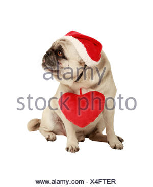 dog with hat and heart, exempted, white background, dressed as santa claus, cutout - Stock Photo