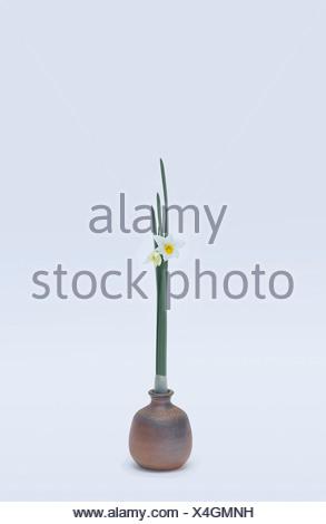 Stylised daffodils in vase - Stock Photo