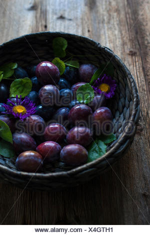 Fresh plums in a large basket on a rustic wooden table - Stock Photo