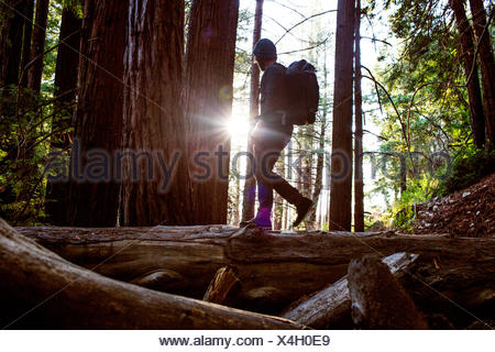 A man walks across a fallen tree in a redwood forest. - Stock Photo