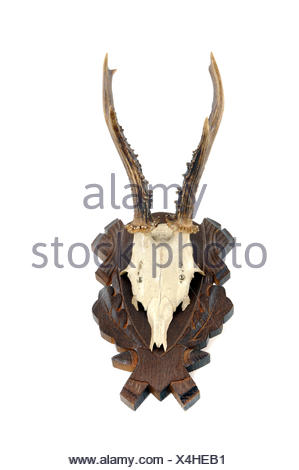 Geweih / Antler - Stock Photo