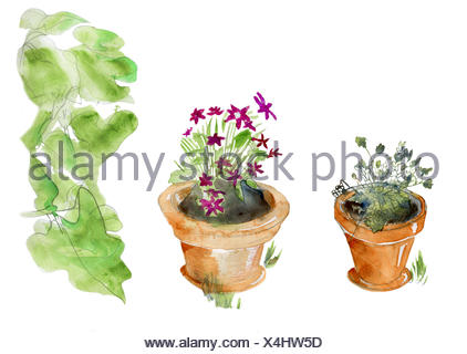 Isolated garden pots - Stock Photo