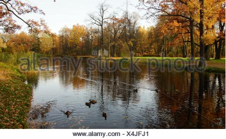 Ducks in the pond - Stock Photo