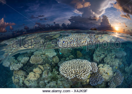 Sunrise on a shallow coral reef at the Tubbataha ranger station. - Stock Photo