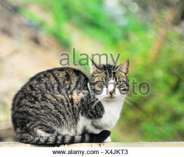 Portrait of sweet tabby cat - Stock Photo