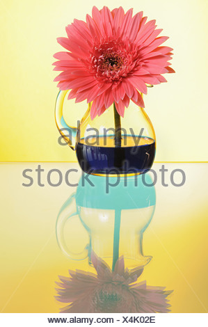 Single Yellow Gerbera Daisy In A Vase Stock Photo 277944353 Alamy