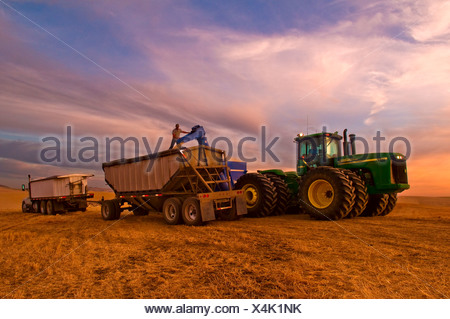 A truck driver supervises the loading of his grain truck from a grain cart at sunset / Pullman, Palouse Region, Washington, USA. - Stock Photo