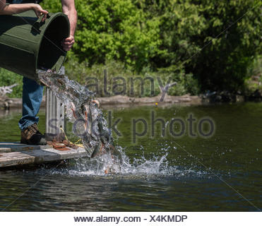MNR stocking Speckled Trout, Ontario, Canada